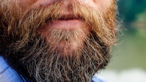 toilet-beard