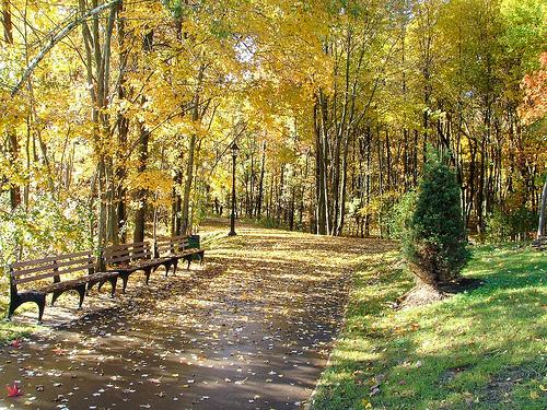 bloomingdale flickr