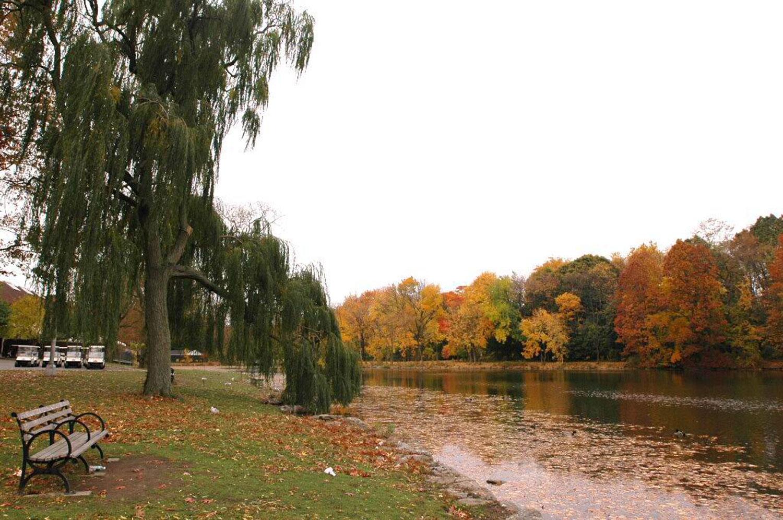 fall-foliage-vcp-lg