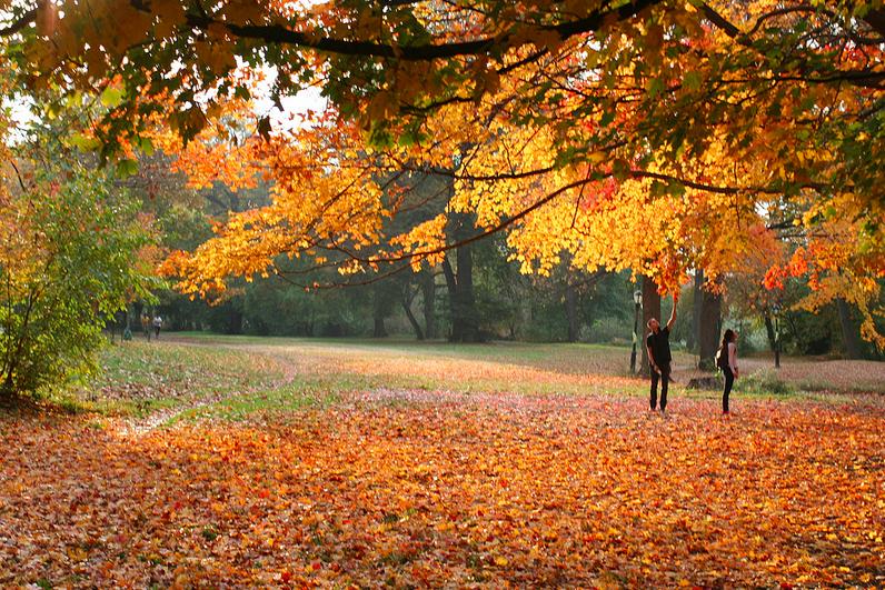 pss_prospectpark_fall_trees