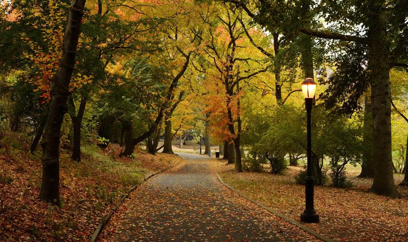 Bloomingdale Park1