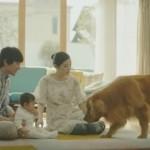 日本Amazon黃金獵犬跟小Baby廣告超有洋蔥!