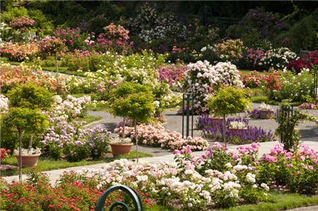 rose-garden-001