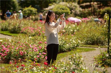 rose-garden-003