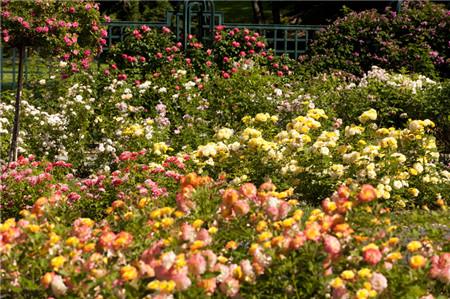 rose-garden-006