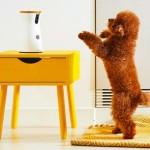 遠距離跟狗狗一起玩耍的APP!