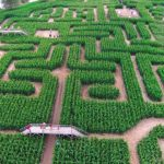 The Amazing Maize Maze 玉米田迷宮冒險 (9/21-10/26)